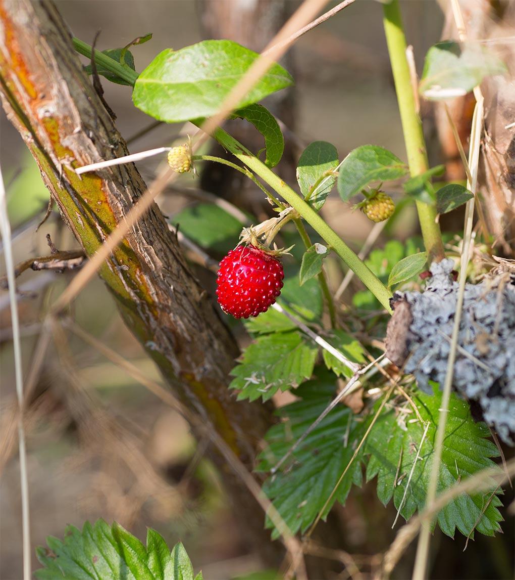 Fruit ferme Ulrich