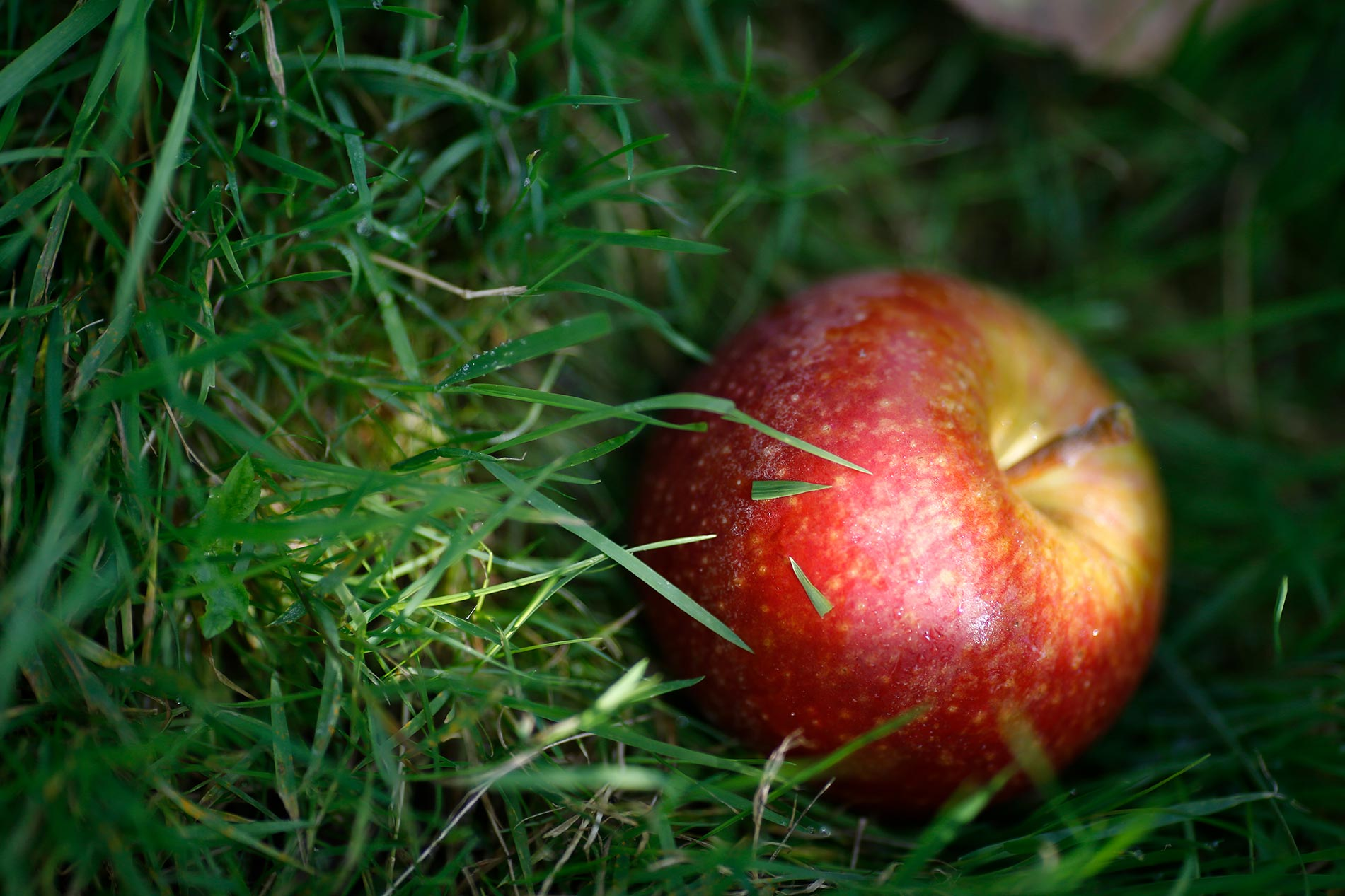 Pomme Vergers Hecky