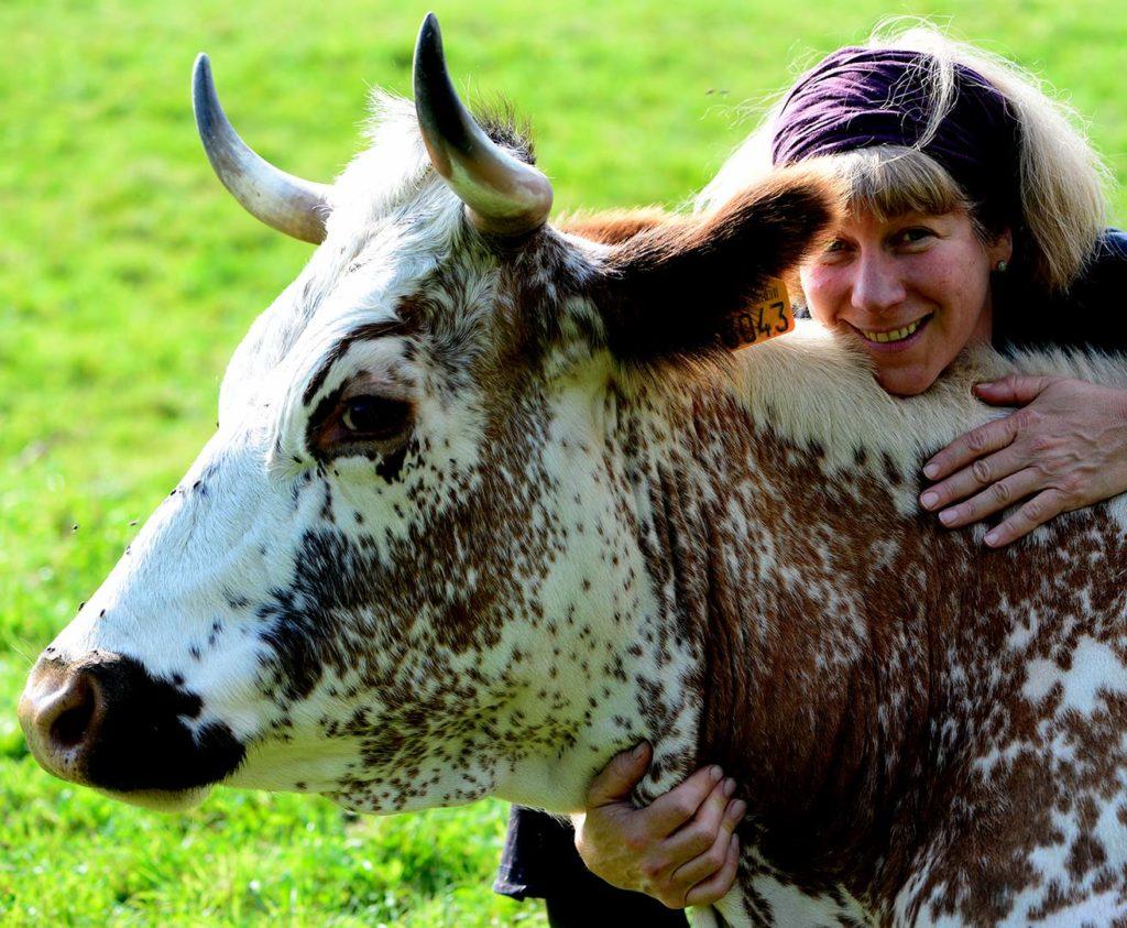 Vache ferme Humbert